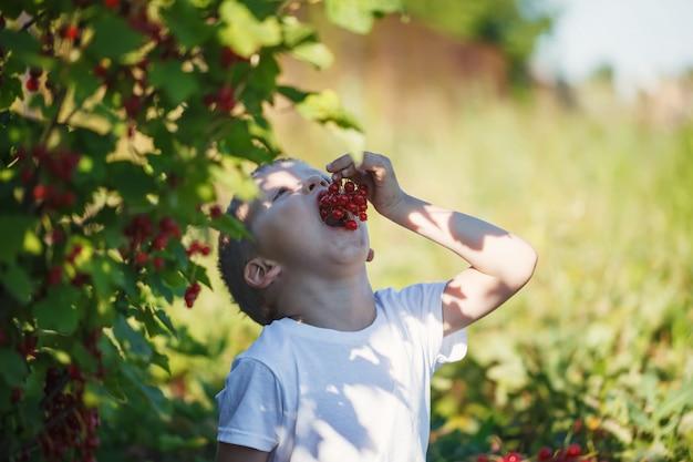Heureux petit garçon mangeant une groseille dans un jardin.