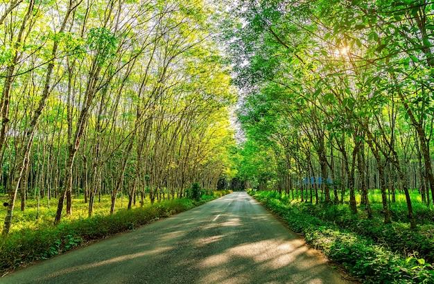 Hévéa, plantations de latex et hévéa