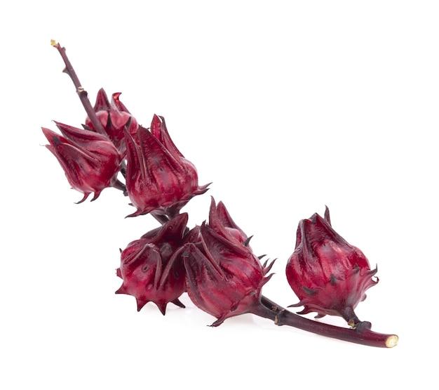 Hibiscus roselle isolé sur une surface blanche