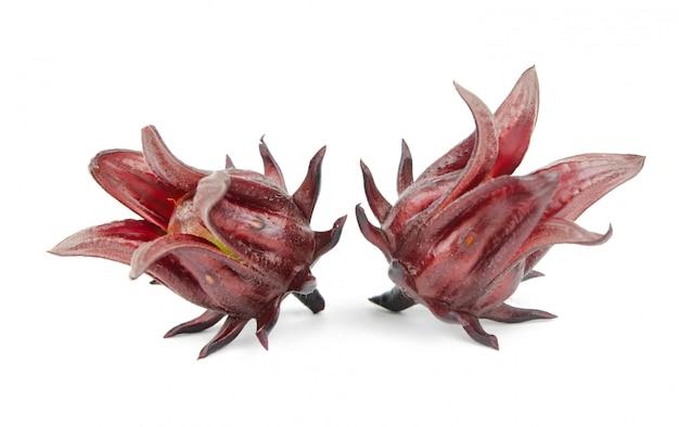 Hibiscus sabdariffa sur blanc