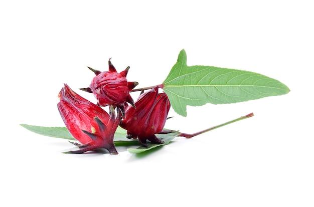 Hibiscus sabdariffa ou fruits oseille sur blanc