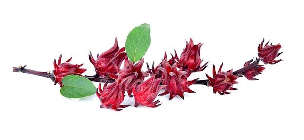 Hibiscus sabdariffa ou fruits roselle isolés sur blanc