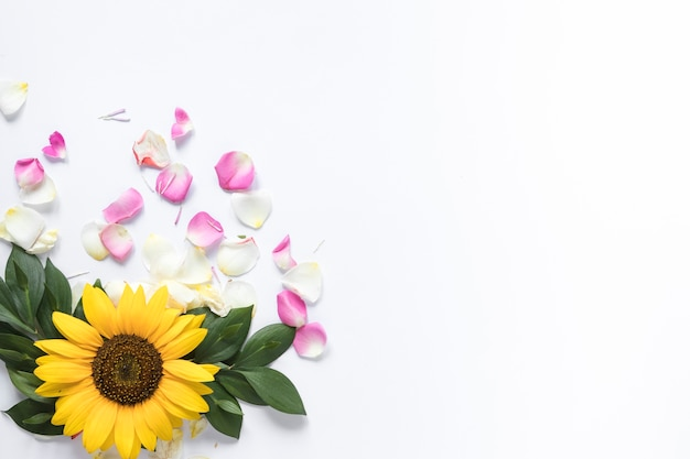 High angle de vue de tournesol avec des pétales roses et blancs sur fond blanc
