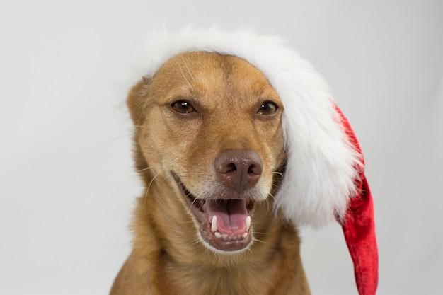 Hiloire suspendu de chien de race mixte heureux