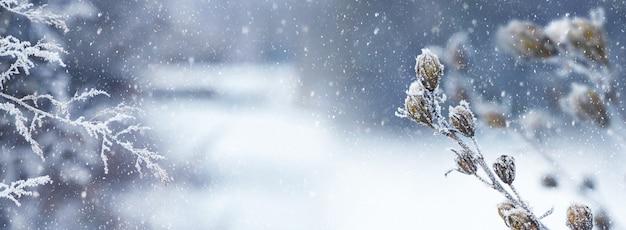 Hiver dans la forêt lors d'une chute de neige. plantes enneigées dans les bois sur la pelouse, il neige