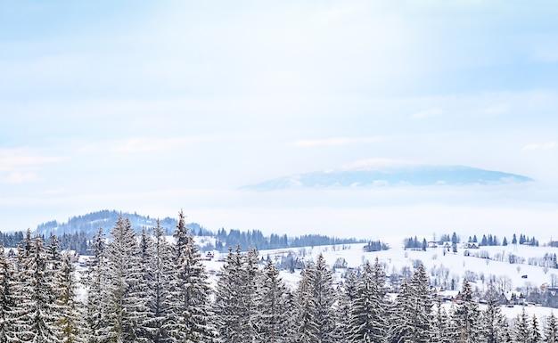 L'hiver dans la forêt de montagne.