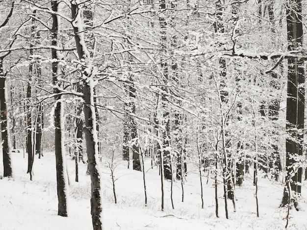 L'hiver en forêt