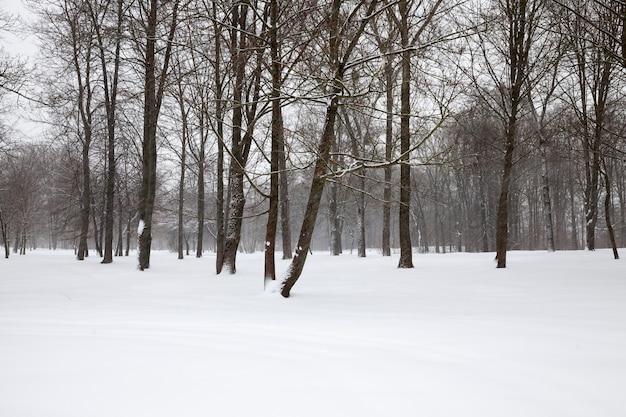 Hiver glacial après les chutes de neige avec des arbres à feuilles caduques nus, temps d'hiver dans le parc ou la forêt et arbres à feuilles caduques, arbres à feuilles caduques en hiver