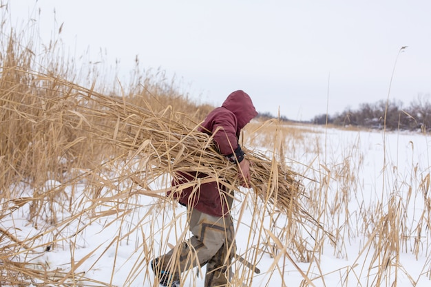 Hiver. un homme tond et recueille des roseaux secs sur un lac glacé.