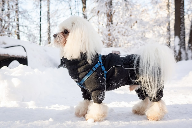 Hiver neige chien