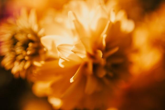 Hojas de petites fleurs jaunes