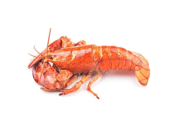 Un homard de boston fraîchement cuit
