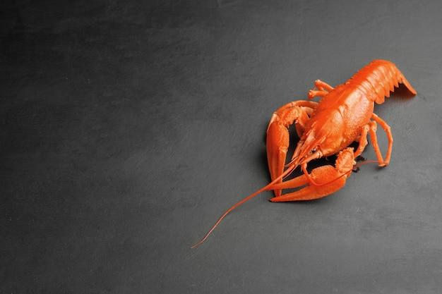 Un homard de fraîcheur de luxe cuit sur fond noir vue de dessus
