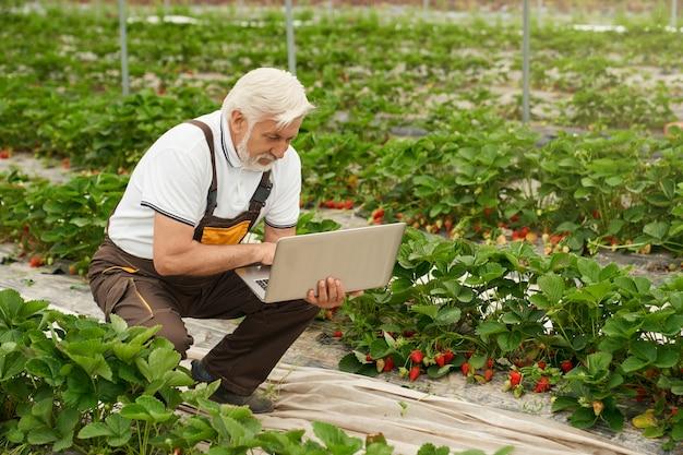 Homme adulte à la recherche d'informations sur un ordinateur portable en serre