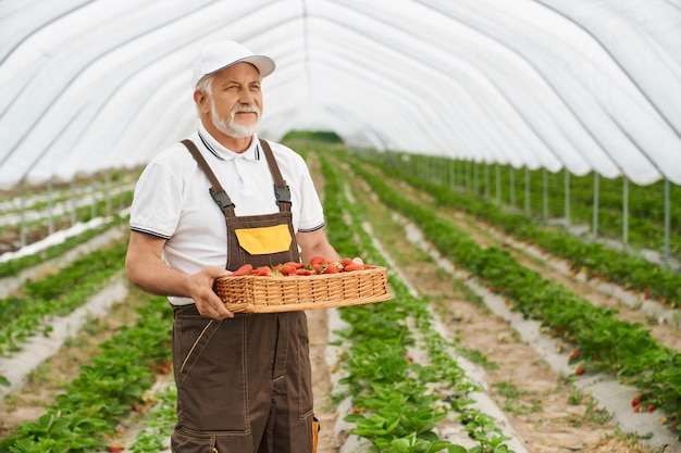 Homme adulte tenant le panier avec la fraise rouge