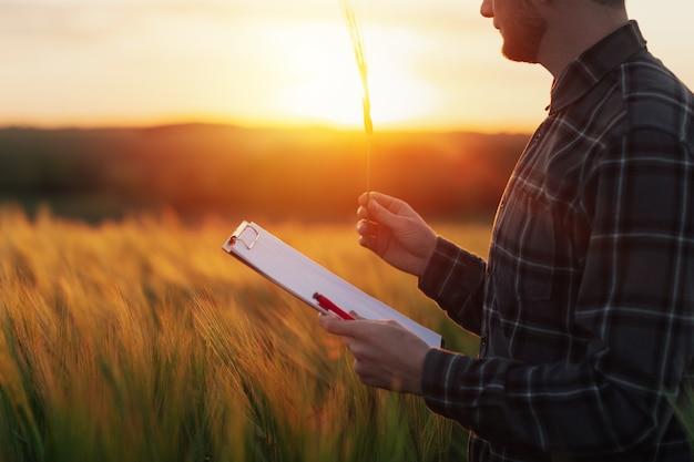 L'homme d'affaires vérifie la qualité du blé