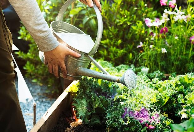 Homme agriculteur adulte arroser un légume