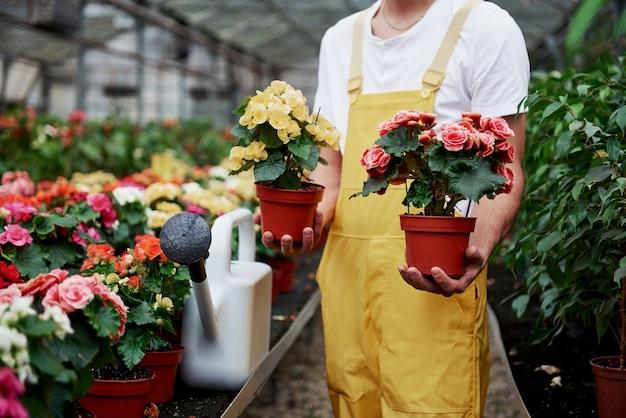 Homme agriculteur tient deux vases avec des fleurs dans la serre pleine de plantes.