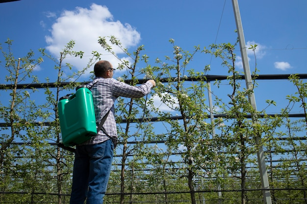 Homme agronome traitant les pommiers avec des pesticides dans le verger