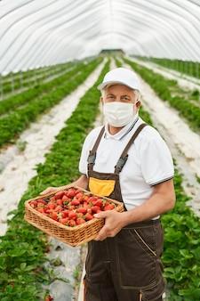 Homme aîné dans le masque protecteur tenant la fraise rouge