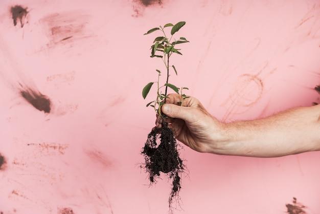 Homme aîné, tenue, plante verte fraîche