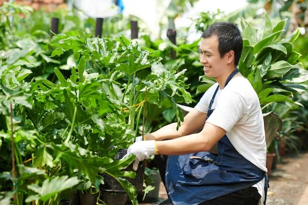 Homme appréciant de travailler avec des plantes