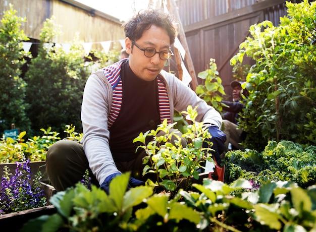 Homme asiatique, jardinage, transplantation, dehors