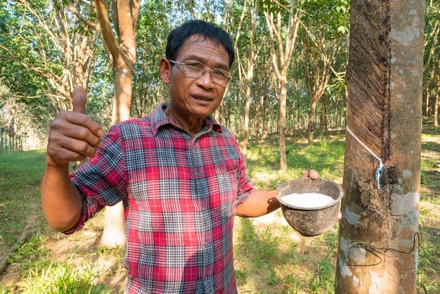 Homme asiatique senior farmer, homme asiatique agriculteur dans les plantations de caoutchouc