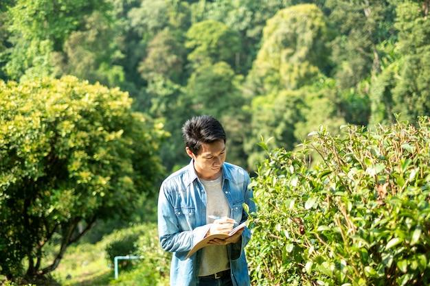 Homme asiatique travaillant dans une plantation de thé vert à chiang-mai thaïlande,