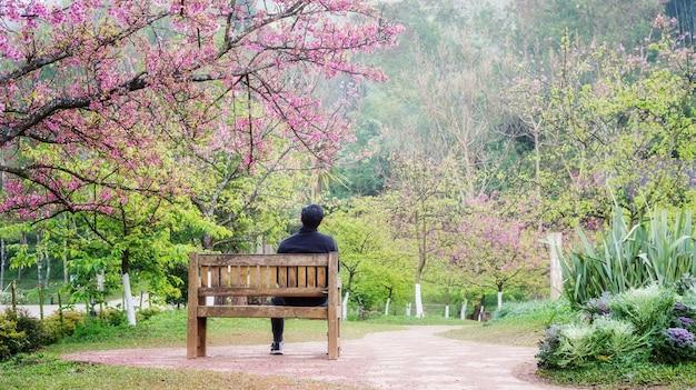 Homme assis dans le jardin de fleurs de cerisier à la station agricole royale d'angkhang.
