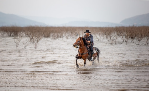 Homme, cheval, sur, champ, pendant, coucher soleil, dans, lac