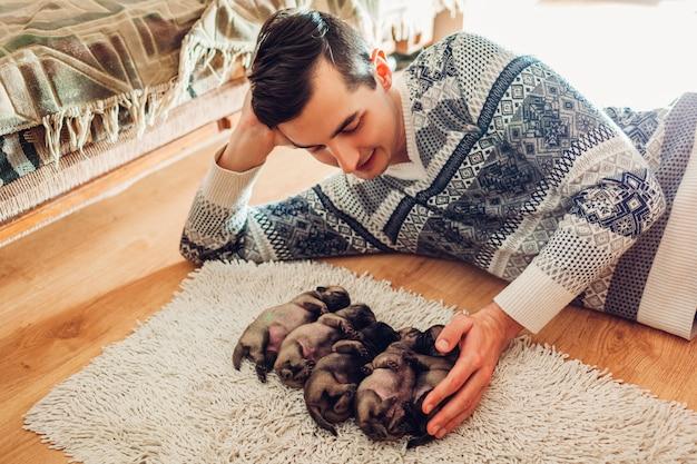 Homme comptant cinq chiots chien carlin dormant sur un tapis à la maison. petits chiots couchés ensemble sur le dos