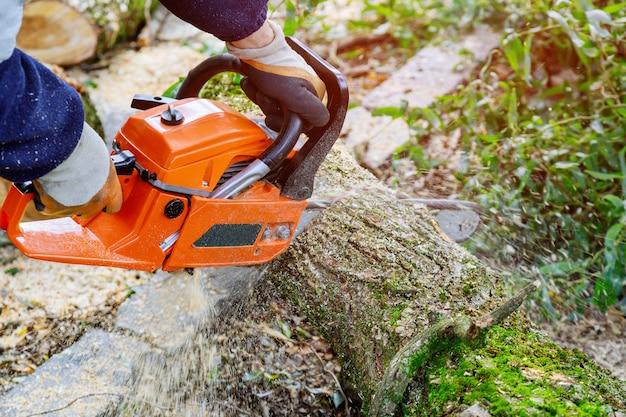 Un homme coupant un arbre avec une tronçonneuse pour les empêcher de tomber