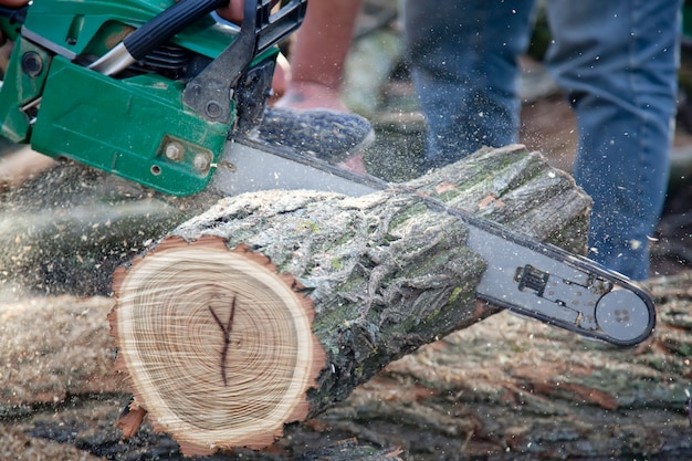 Homme coupe un morceau de bois avec une scie à chaîne