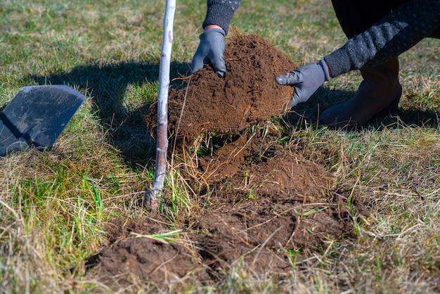 Homme creusant du gazon et inversant la saleté. préparation du sol autour de la plante pour le système d'arrosage.