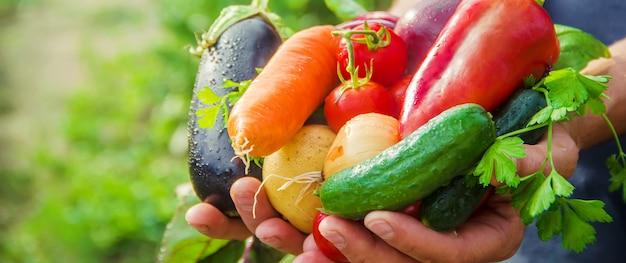 Un homme dans le jardin avec des légumes dans ses mains.