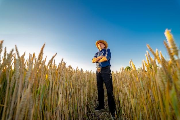 Homme dans le pré de blé et de soleil. design conceptuel.