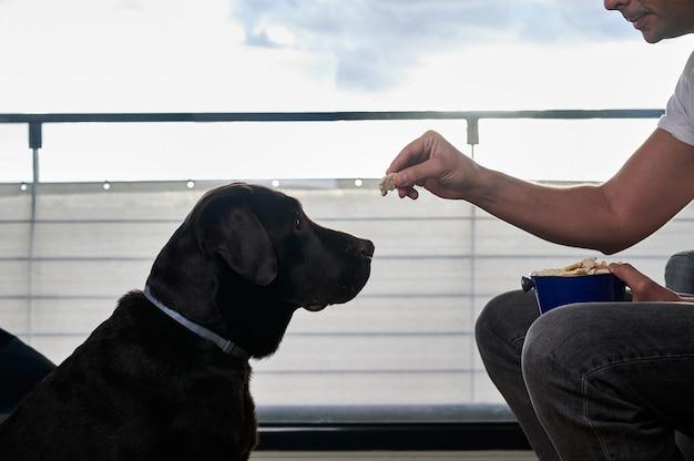 Homme donnant une friandise à son chien
