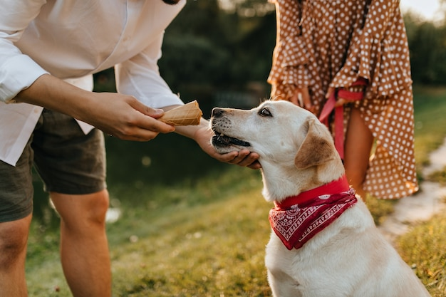 L'homme donne à son labrador essayer une tasse de gaufres avec de la crème glacée tout en marchant dans le parc.