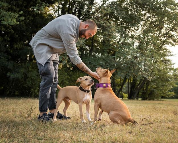 Homme entraînant ses chiens pitbull