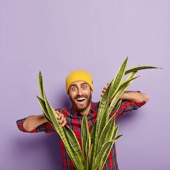 Homme européen positif avec chaume, regarde à travers sansevieria ou snakeplant, porte un chapeau jaune et une chemise à carreaux, pose sur fond violet.