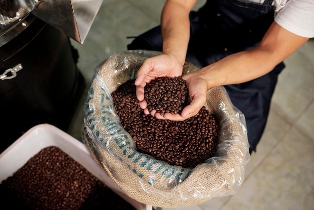 Homme examinant les grains de café