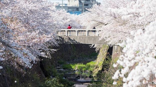 Homme et femme couple sur pont selfie avec beau cerisier ou fleur de sakura blanc le long de la rivière yamazaki, nagoya, japon. célèbre voyage ou point de repère touristique pour profiter ou hanami au printemps.