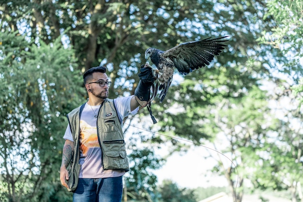 Homme formation faucon parabuteo unicinctus
