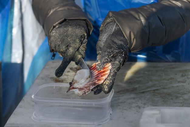 L'homme en gants et tablier nettoie le pétoncle de l'atlantique.