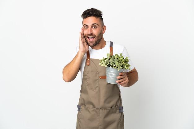 Homme jardinier tenant une plante sur fond blanc isolé avec une expression faciale surprise et choquée