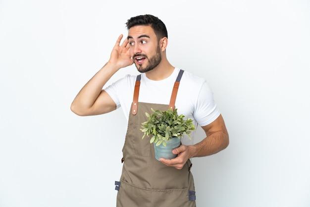 Homme jardinier tenant une plante isolée sur fond blanc en écoutant quelque chose en mettant la main sur l'oreille