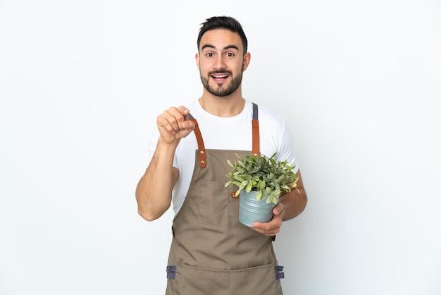 Homme jardinier tenant une plante isolée sur fond blanc surpris et pointant vers l'avant
