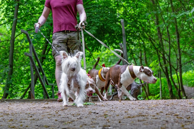 Homme, marche, chiens, parc