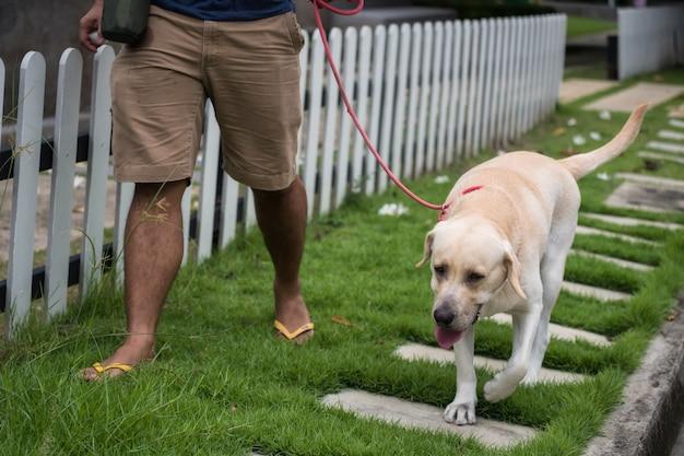 Homme marcher avec un chien labrador retriever